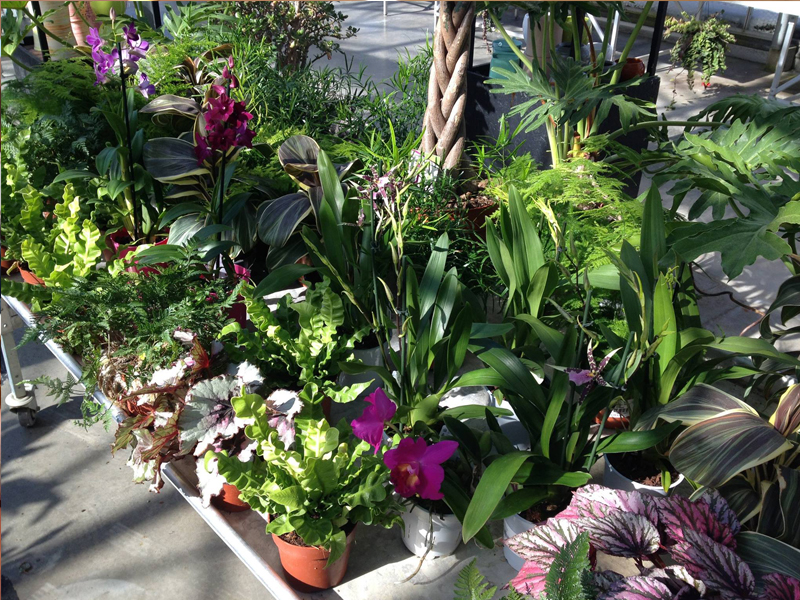 Les plantes des serres