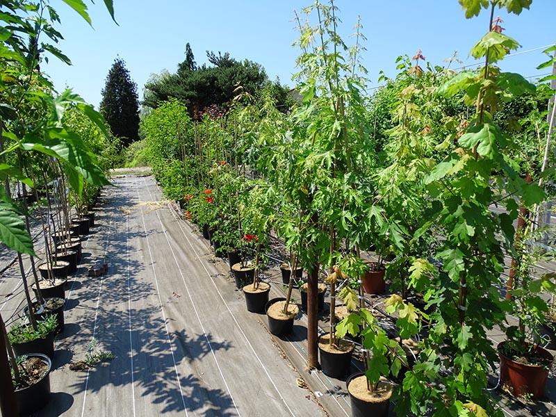 Pépinière : arbres et arbustes